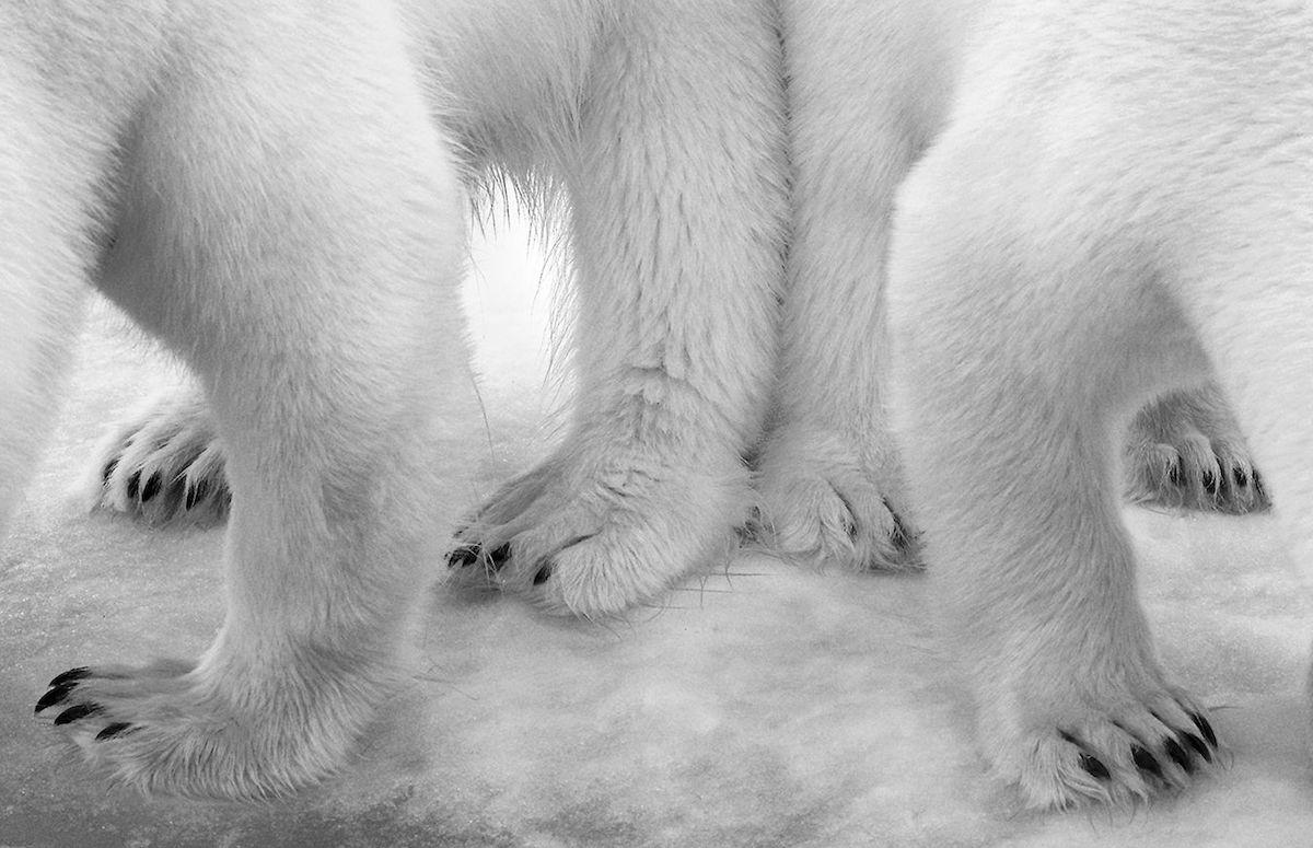 winner Wildlife Photographer of the Year photo contest