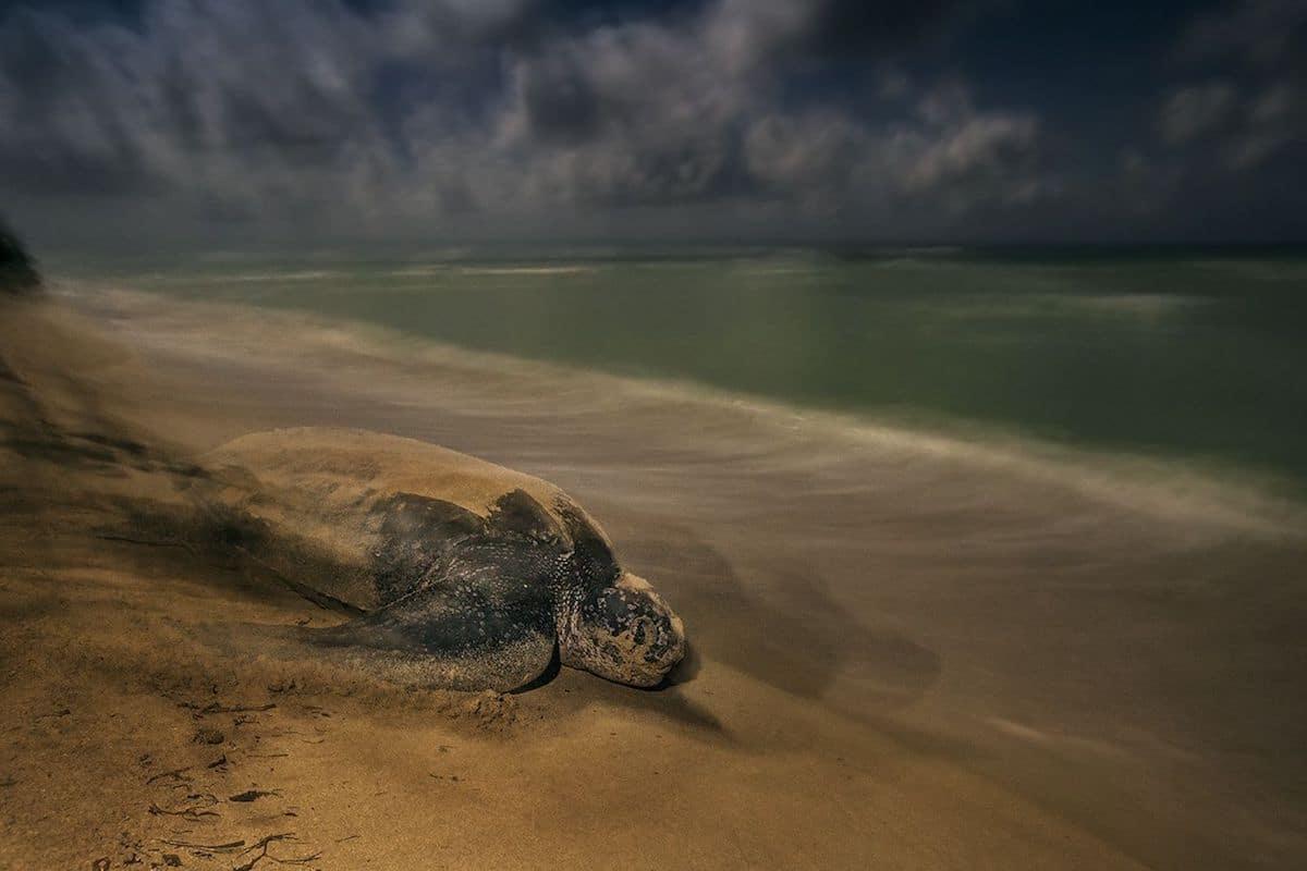 2017 Wildlife Photographer of the Year Winners