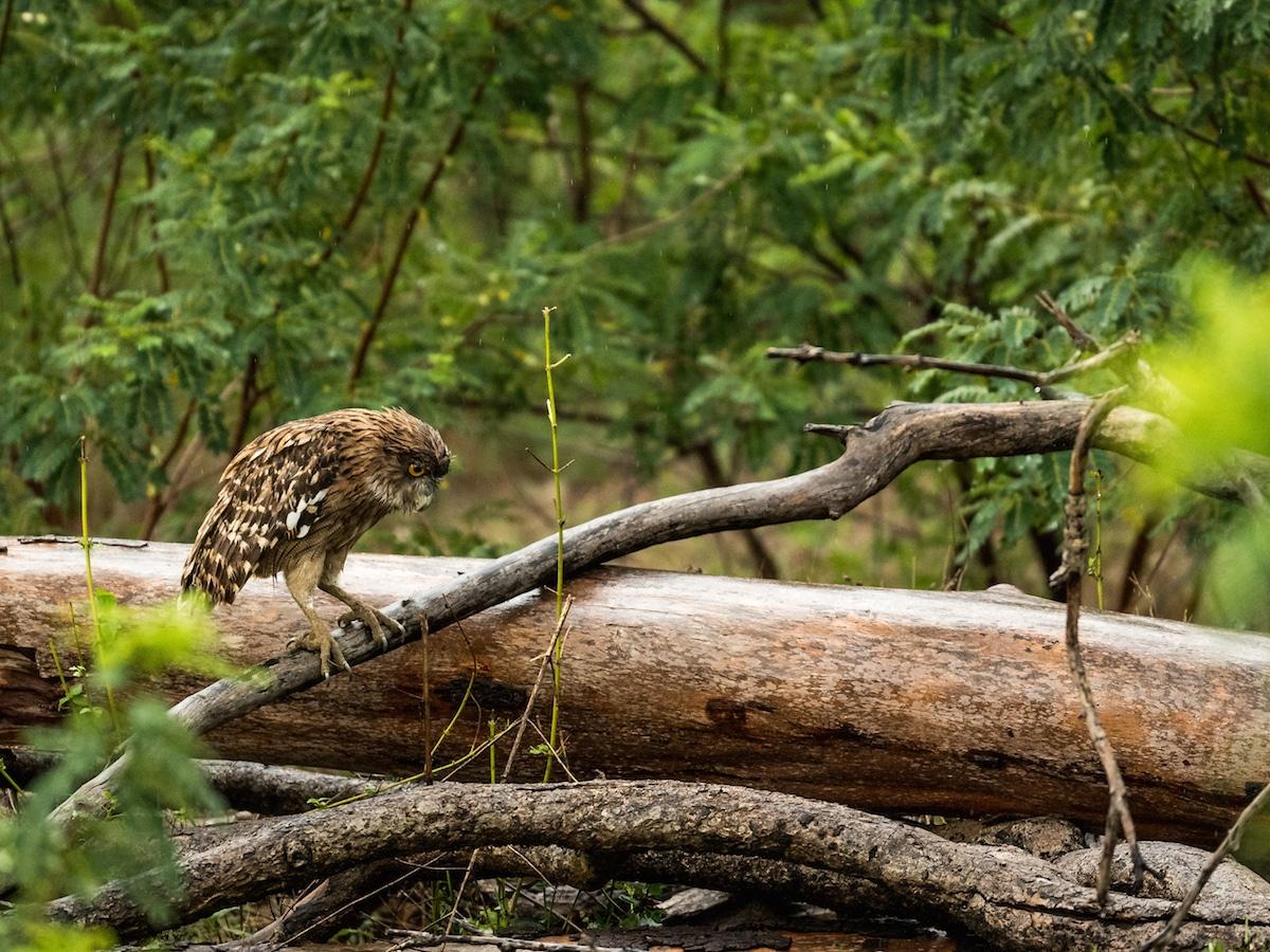 George Turner Wildlife Photography