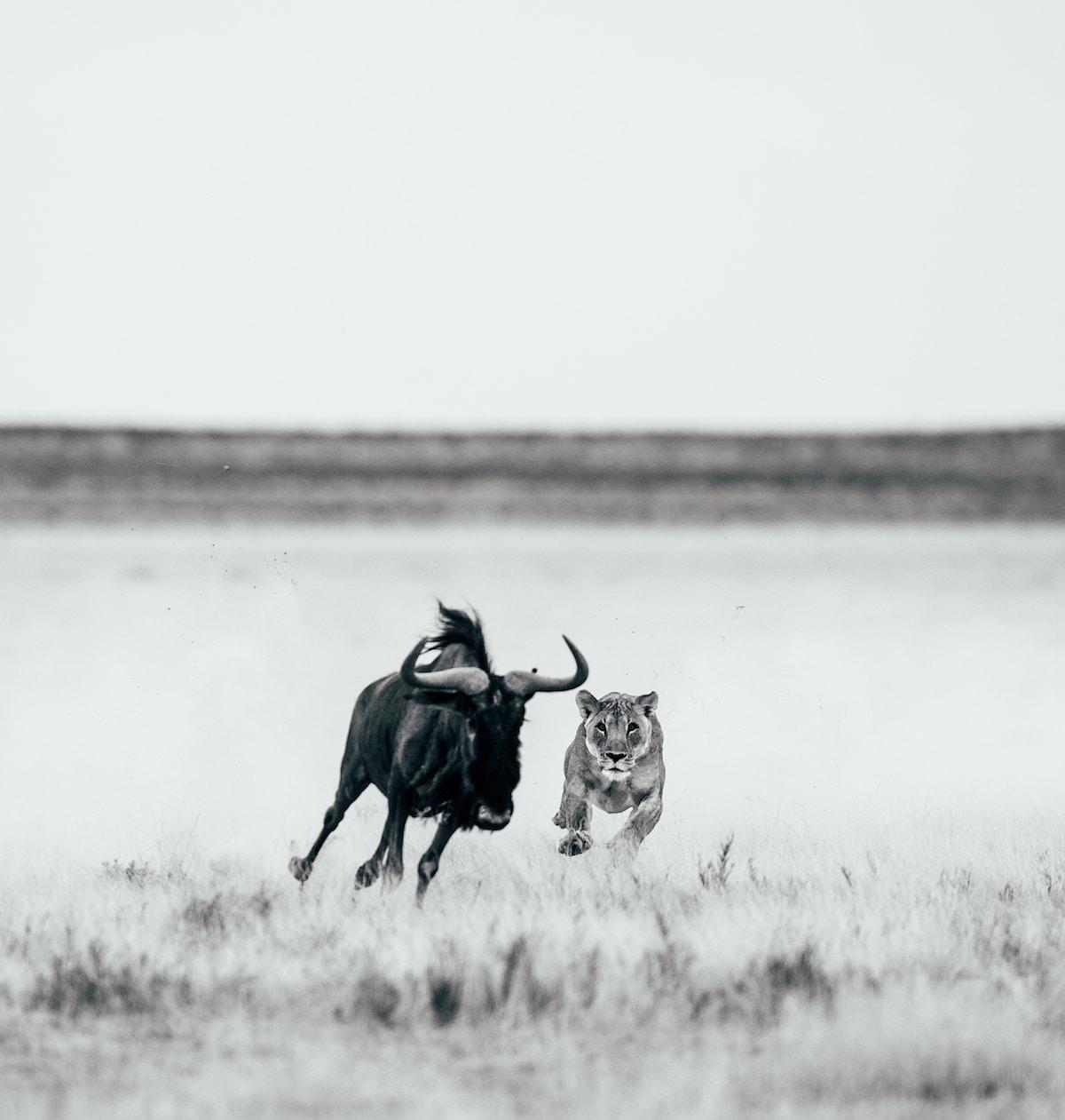George Turner Wildlife Photographer