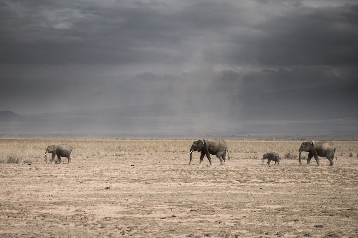 Richard Johnston Wildlife Photography