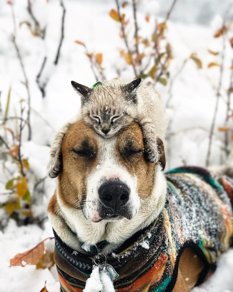 Cat And Dog Traveling Togeather