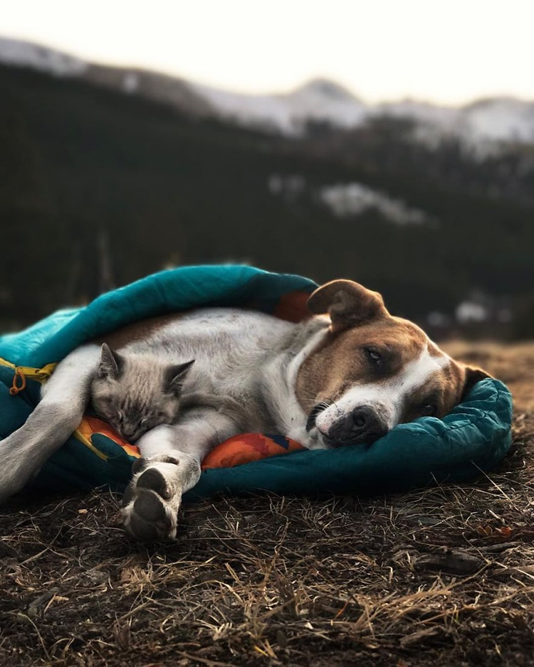 Cat And Dog Best Friends Explore Colorados Breathtaking Moutainscapes - Cat and dog duo take the best travel photos ever