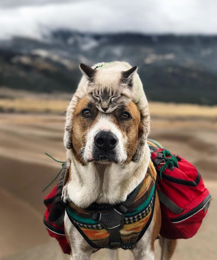 Cat and Dog Travel Together Henry and Baloo