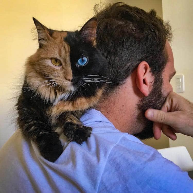 Unusual Cats