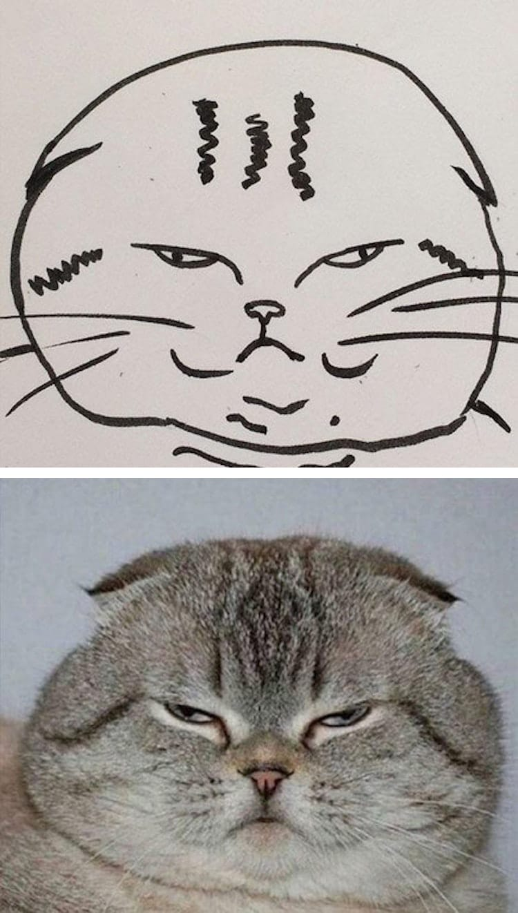 how to draw your own cat