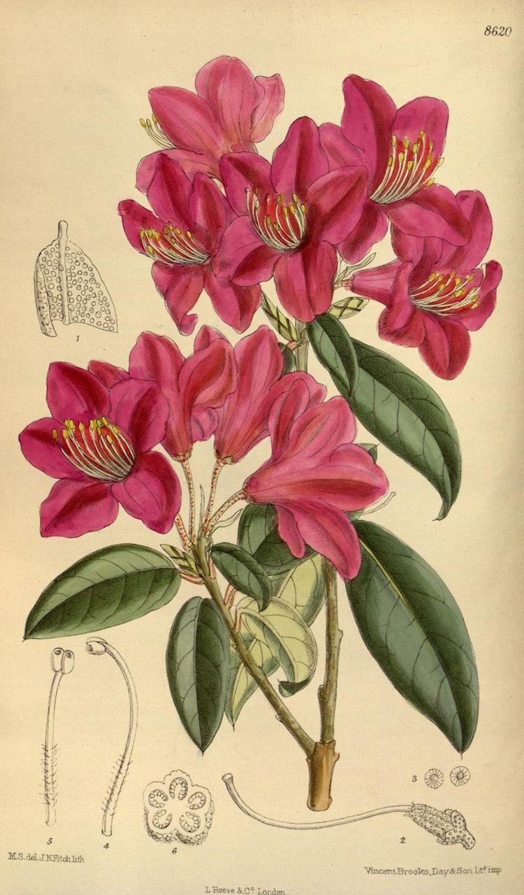 vintage flower sketches