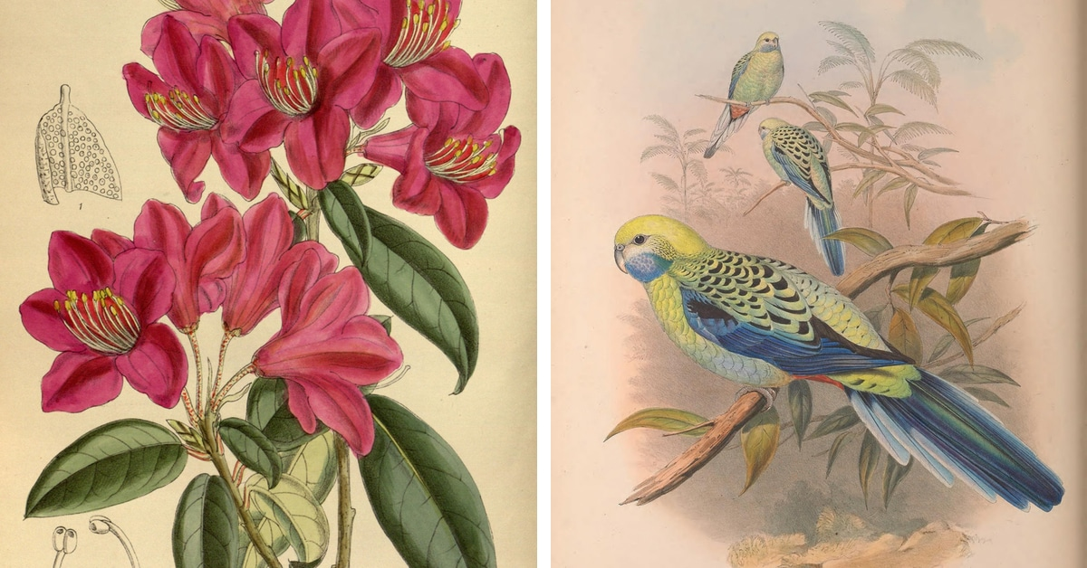 Biodiversity Heritage Library Makes 2 Million Botanical Illustrations Available Online for Free