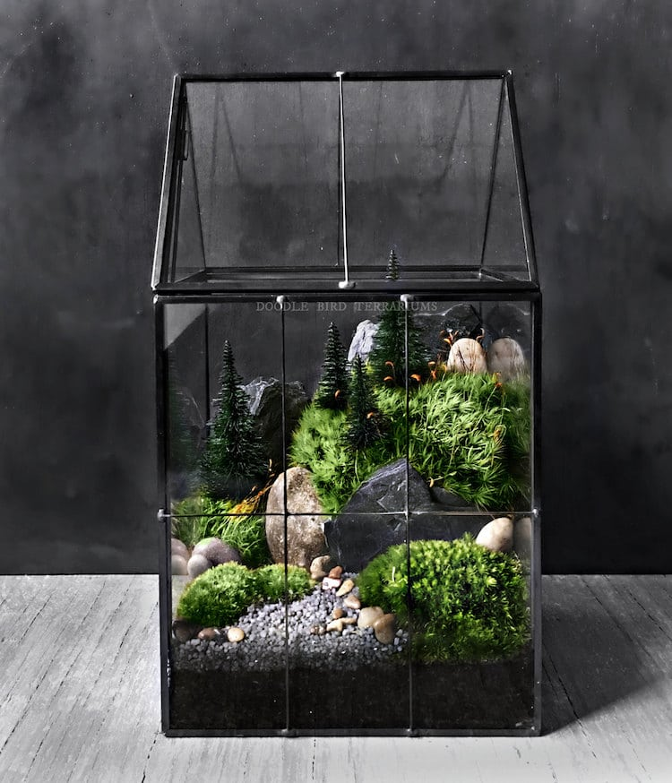 Gift Plants And Plant Ideas Perfect Container Garden For You: Plant Gifts And Gardening Gifts Are Perfect For Plant Lovers