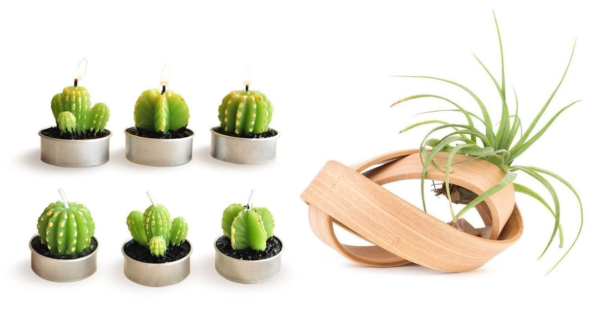 Plant Gifts Green Thumb