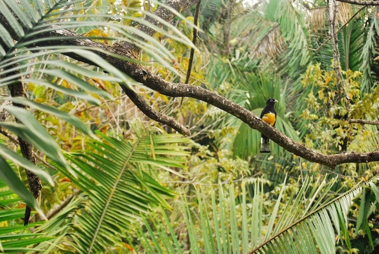 reforestation in the tropical rainforest