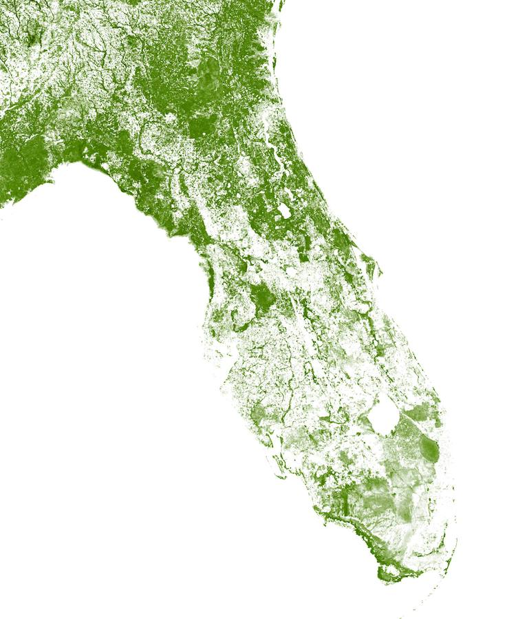 map of florida forest