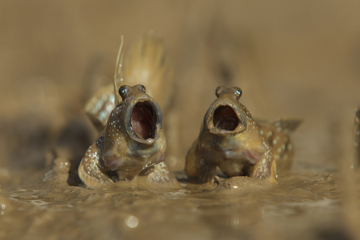 Comedy Wildlife Photography Awards 2017