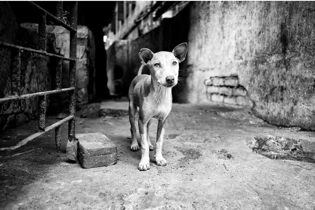 Dog Portraits by Alan Schaller