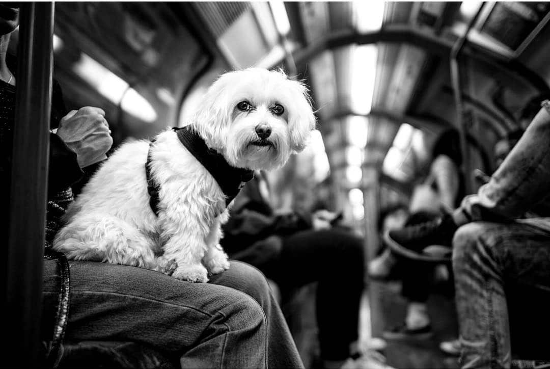 Dog Portraits by Alan Schaller