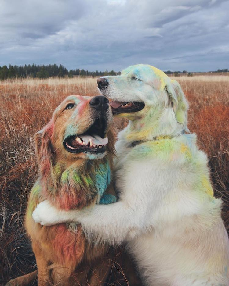 Love Knows No Species With These Adorable Animal Friends - Cat and dog duo take the best travel photos ever