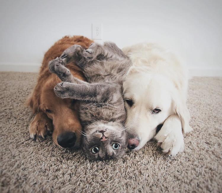 Pet Friendship