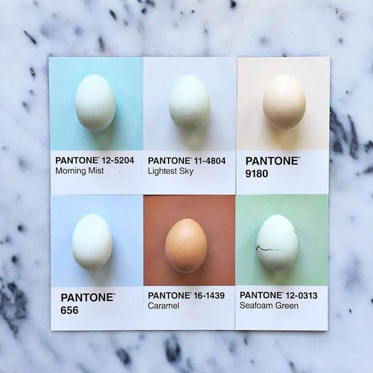 Pantone Art With Food by Lucy Litman