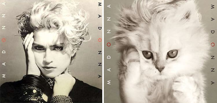 Iconic Album Covers Are Absolutely Adorable When Replaced with Kittens