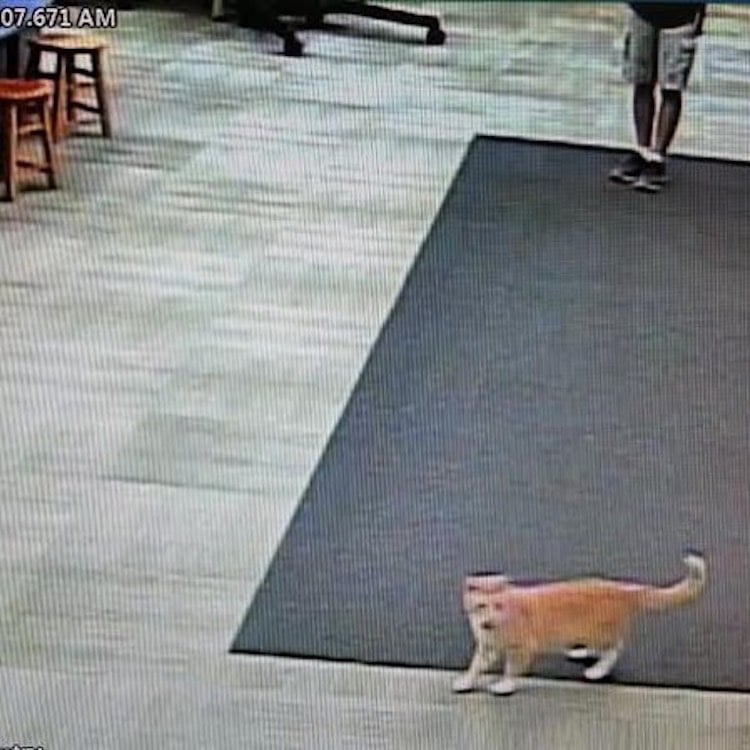 Library Cat