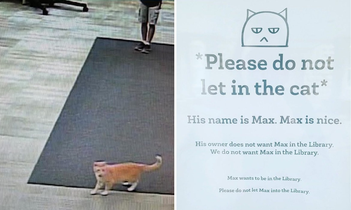 0fd54a503476 Max the Cat Banned From Being Library Cat But Rockets to Internet Fame