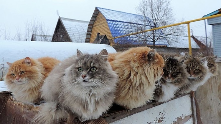 Image result for snowy cat images