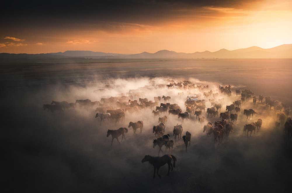 photograph of wild horses