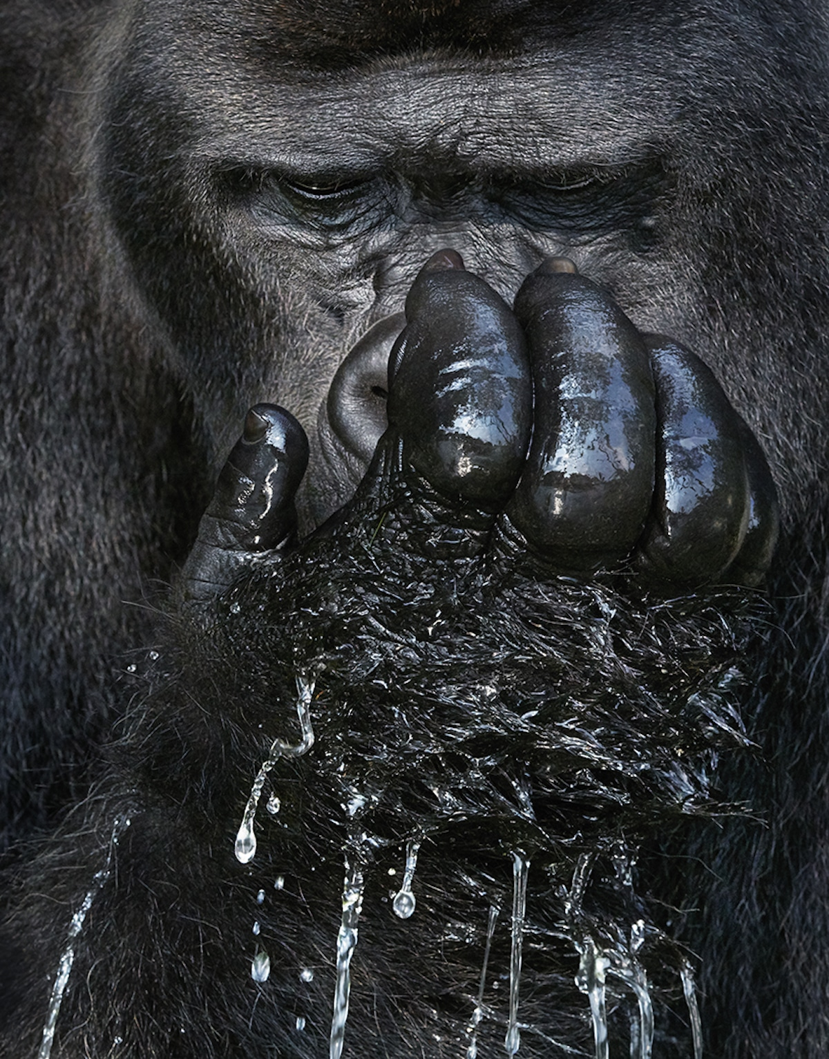Endangered Animal Photos by Tim Flach