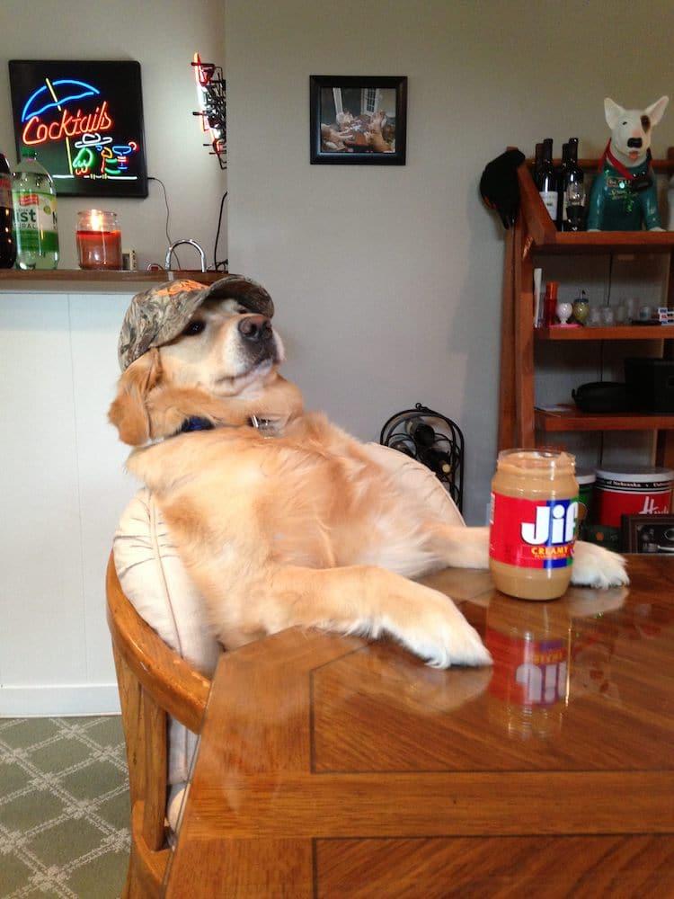 Golden Bailey Cute Dog Memes