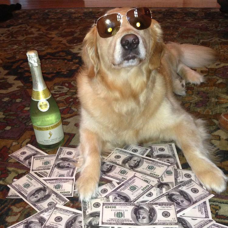 Golden Bailey Funny Dog Memes