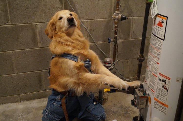 Funny Dog Meme Images : Heartfelt tribute to golden bailey creator of funny dog memes