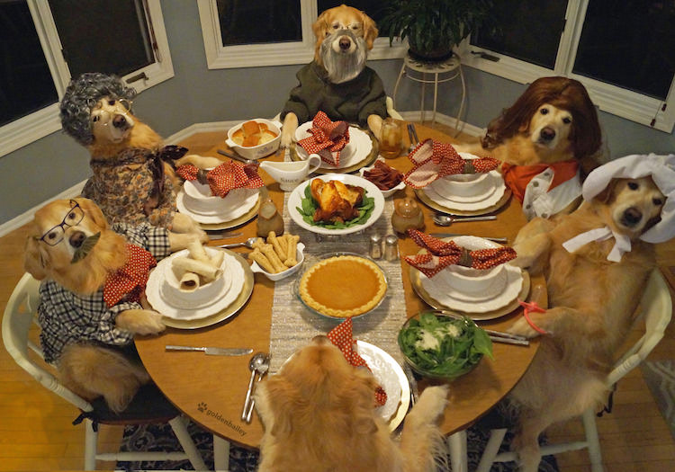 super.dogs.3hours.to.pose.meh.dinner.jpg
