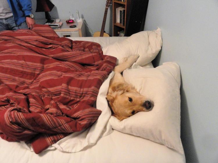 Heartfelt Tribute to Golden Bailey, Creator of Funny Dog Memes