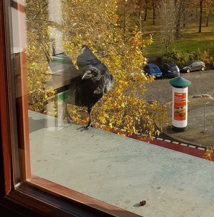 Bird Friends at the Office