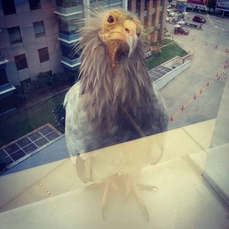 Photos of Friendly Birds