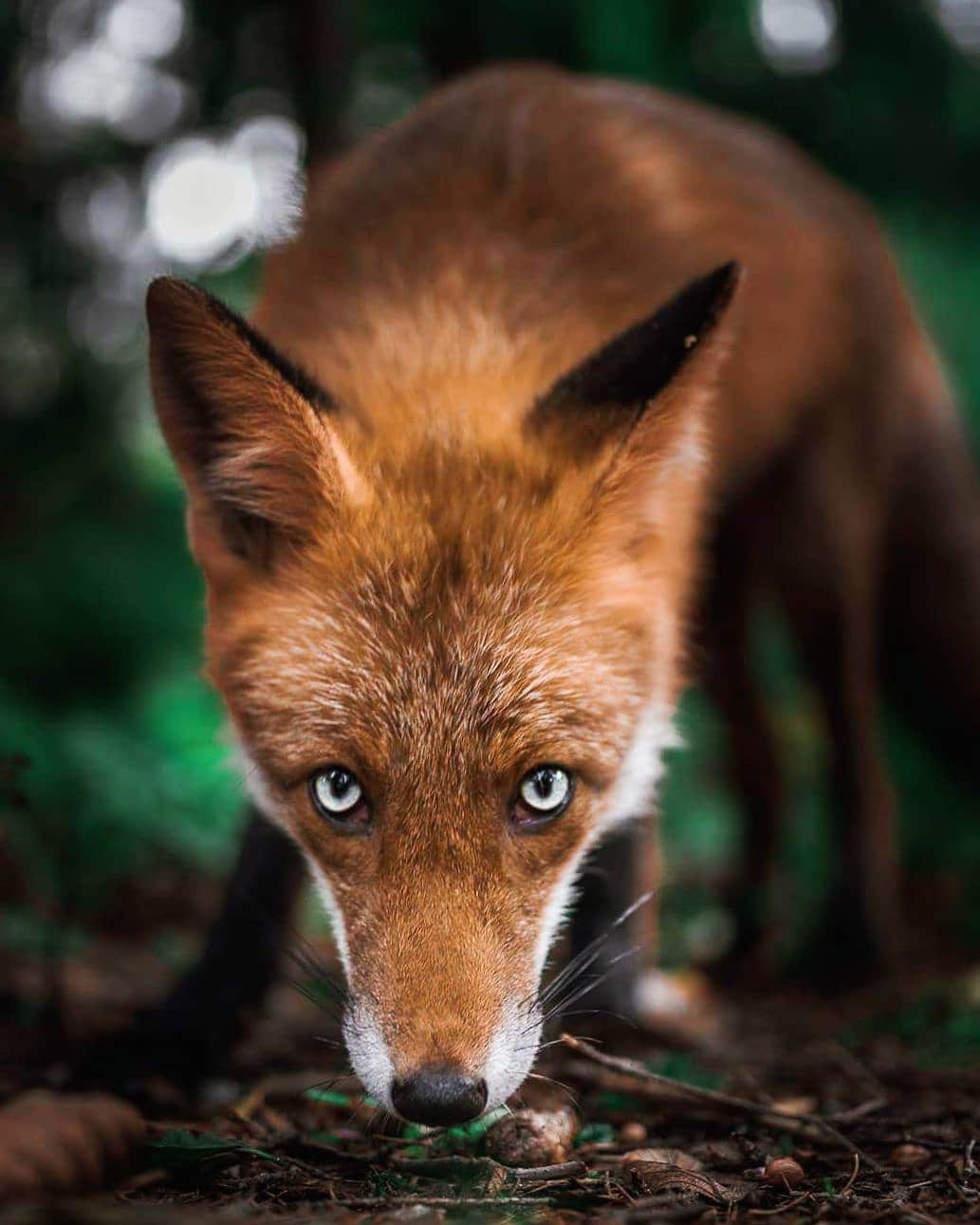 Animals: Photos Capture Finland's Fairytale Forest Animals In The Wild