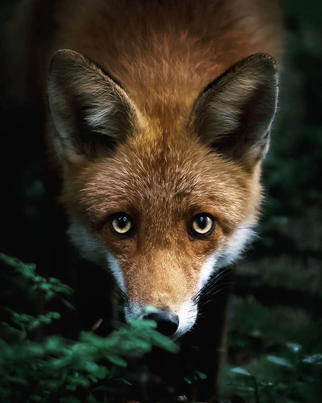 Photos Capture Finland's Fairytale Forest Animals In The Wild