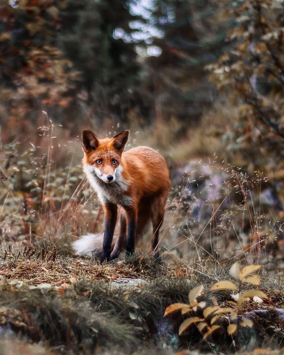 Photos Capture Finland's Fairytale Forest Animals In The Wild