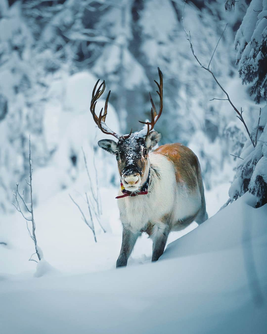 Photos of Forest Animals by Joachim Munter
