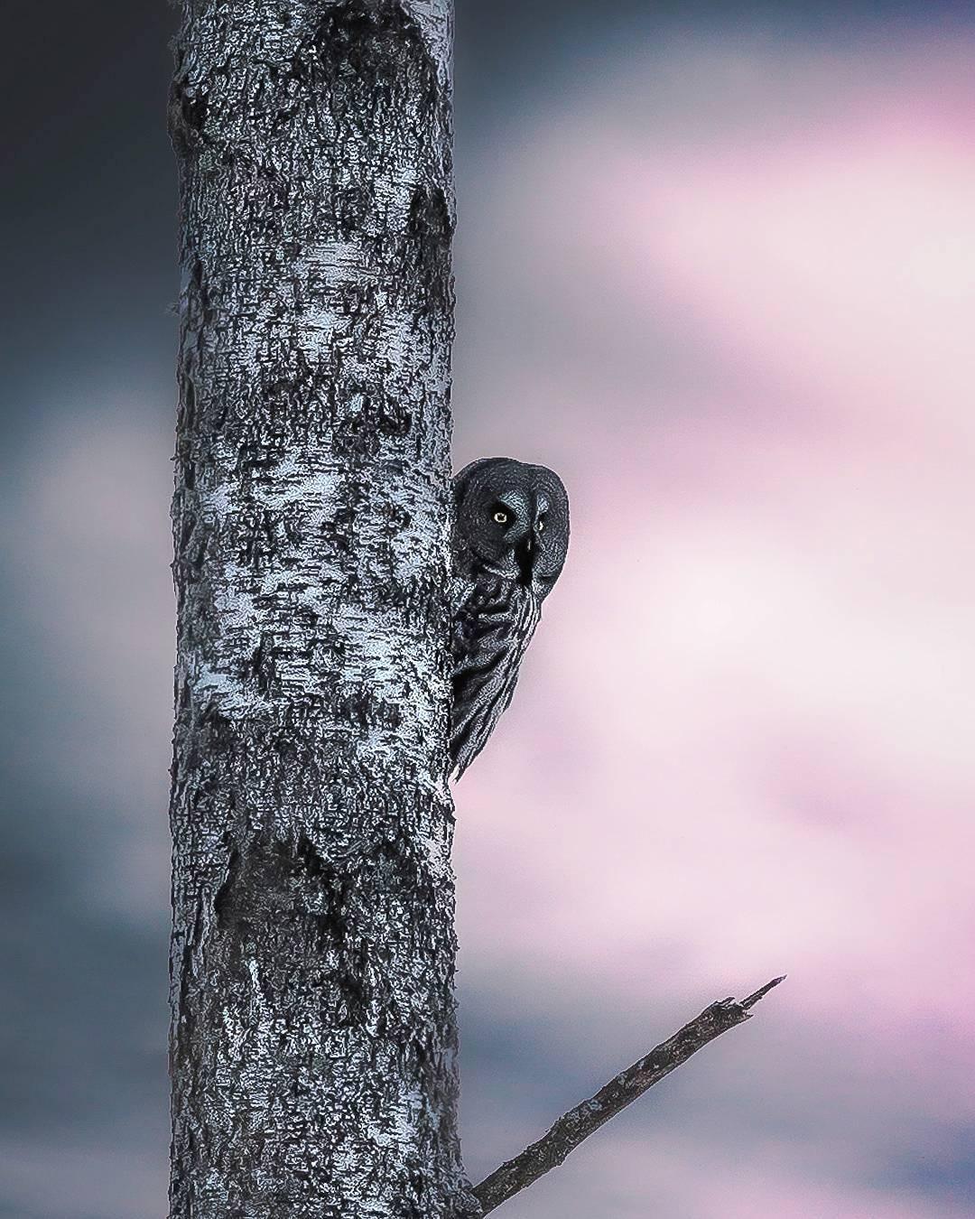 Photos of Forest Animals by Joachim Munter