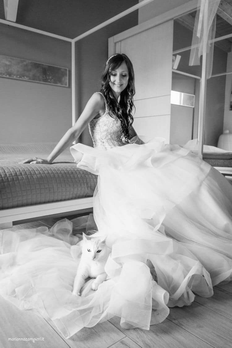 Cats in Wedding Photoshoot Ideas by Marianna Zampieri