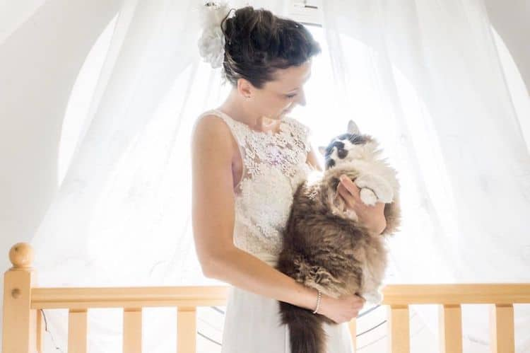 Wedding Photo Ideas by Cats in Wedding Photoshoot Ideas by Marianna Zampieri