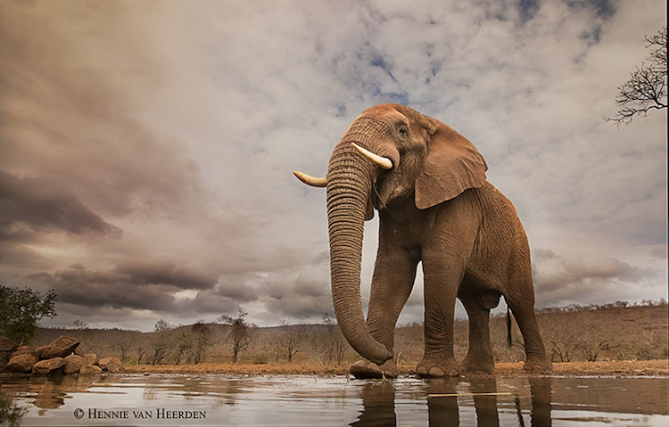 Wildlife Photography by Hennie van Heerden