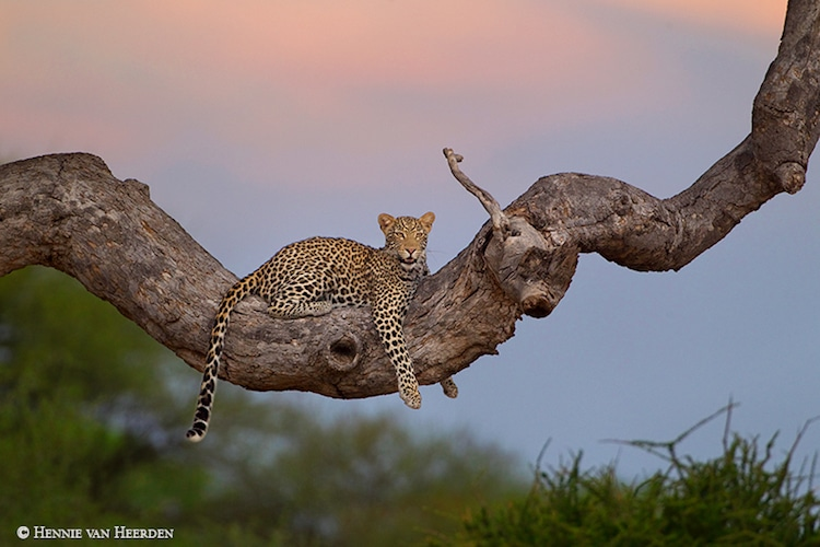 Hennie van Heerden Wildlife Photographer
