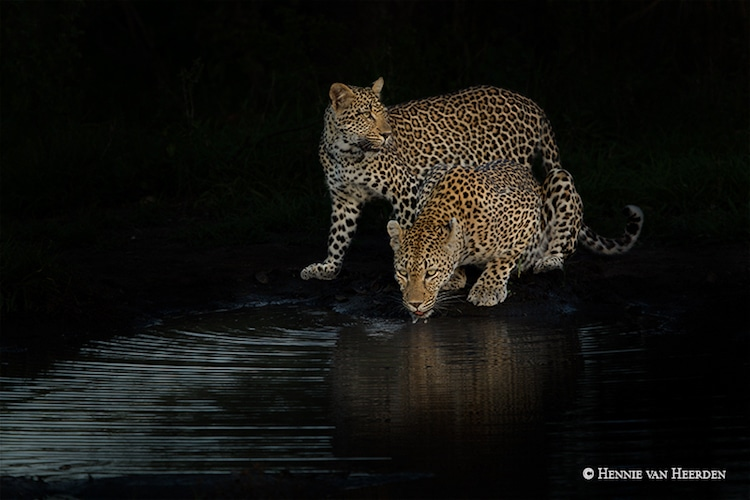 Photo of a Leopard by Hennie van Heerden