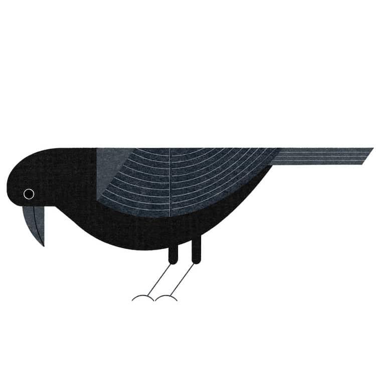 Illustrated Tokyo Bird Book by Ryo Takemasa