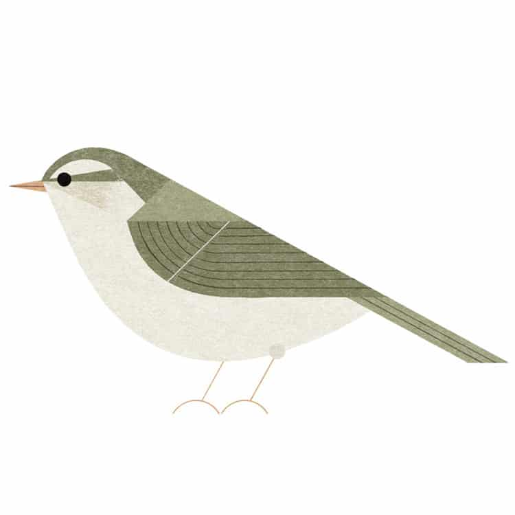 Illustrated Tokyo Bird Book by Ryo Takemasa