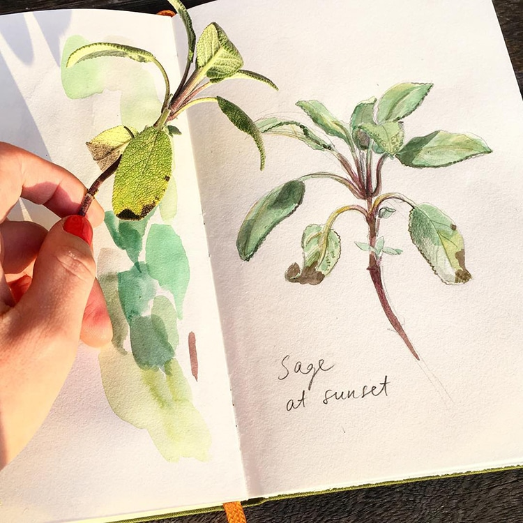 Botanical Illustrations by Somang Lee