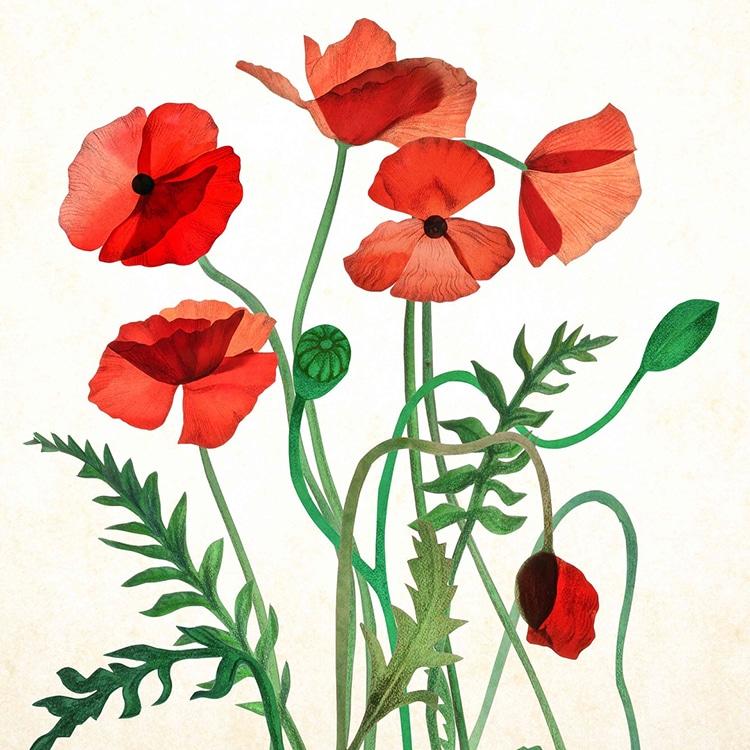 Botanical Illustrations by Somang Lee