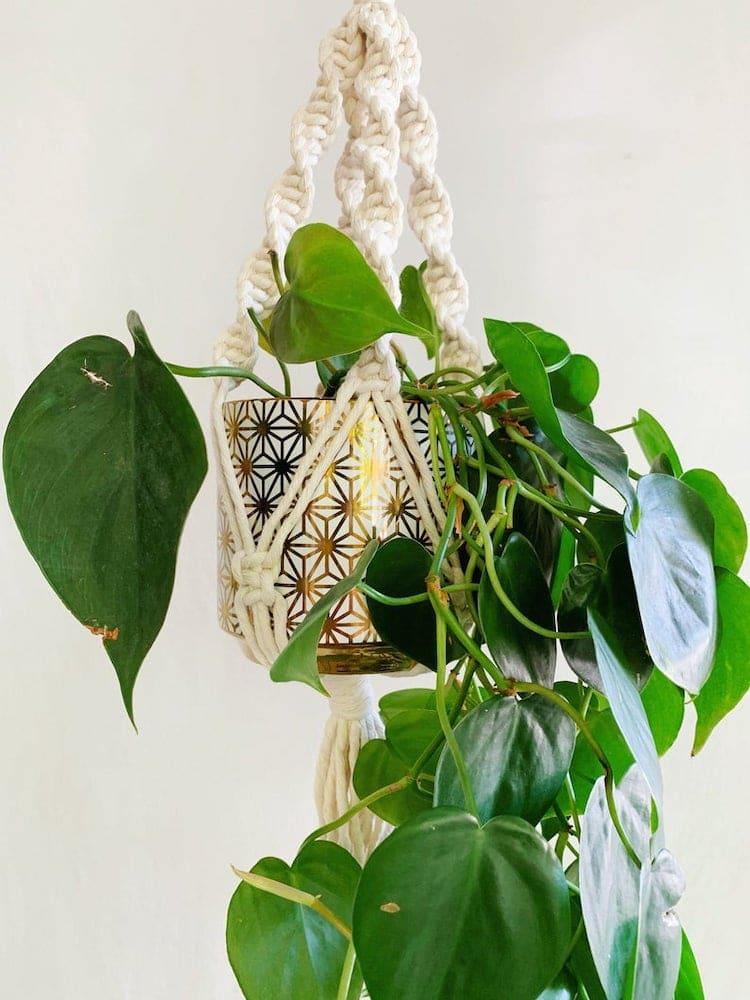 Hanging Plant Kit
